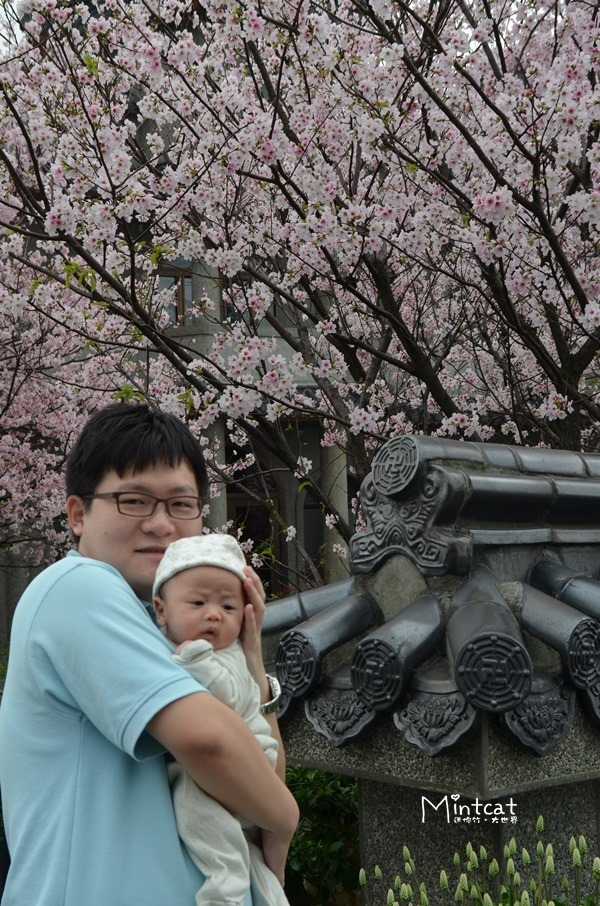 【陽明山花季】東方寺與蔡博士櫻花園賞櫻花況(2013/03/24)