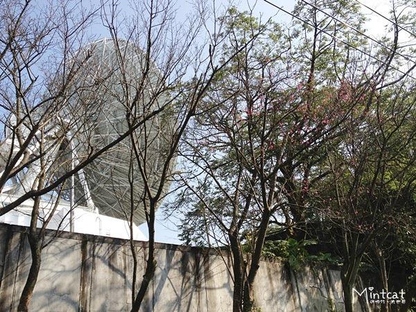 20140107-陽明山櫻花花況 (19)